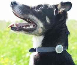 Verhaltens- & Aktivitätsmonitor für Hunde