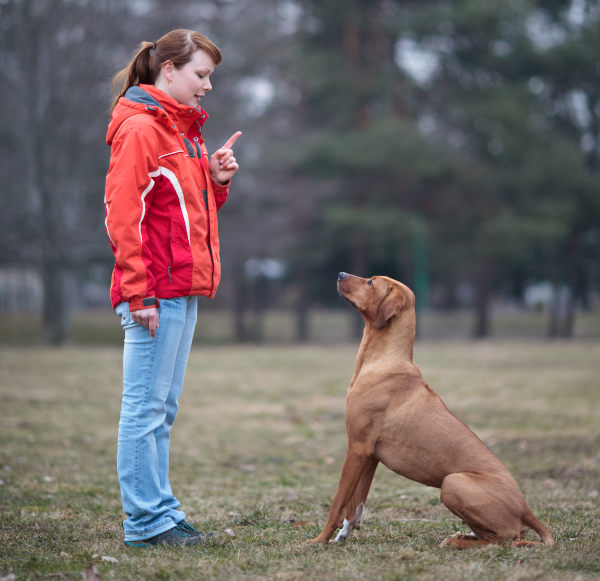 Beliebte Berufe mit Hunden: Hundetrainer