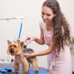 Berufe mit Hunden - Hundefrisör