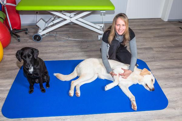 Hundephysiotherapie als Beruf mit Hunden