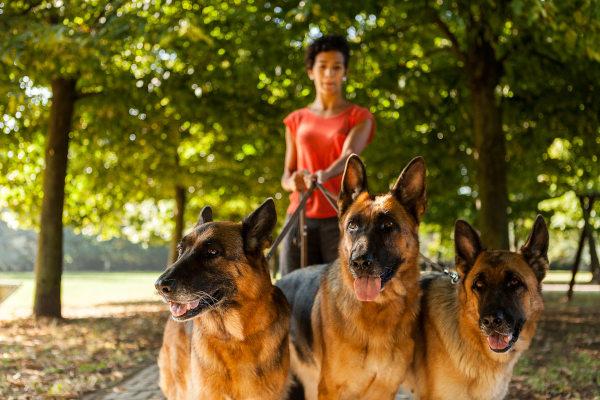 Hundesitter als Beruf