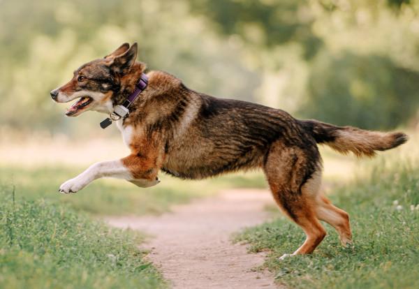 GPS Tracker für Hunde am Halsband