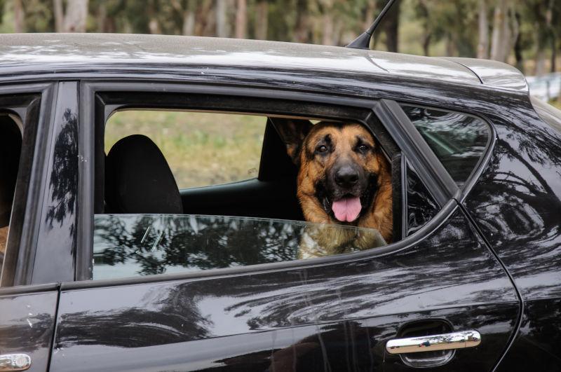 Autofahren Hund