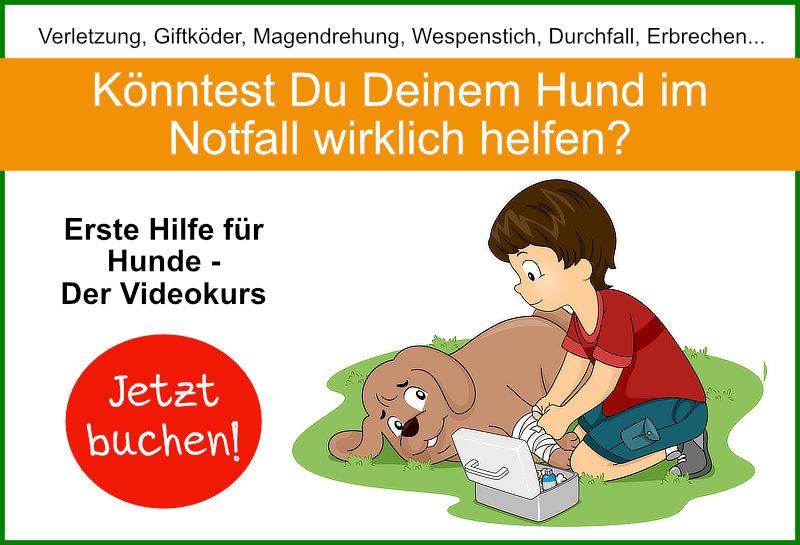 Erste Hilfe Kurs für Hunde - Videokurs