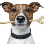 Hundefutter selber machen - Rezepte für Hunde