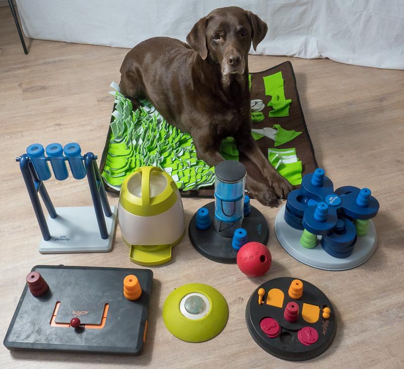 Hund Intelligenzspielzeug