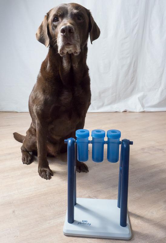 Hunde Intelligenzspielzeug