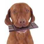 Hunde-Schokolade