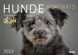Uli Stein – Hunde Porträts 2022: Monatskalender für die Wand