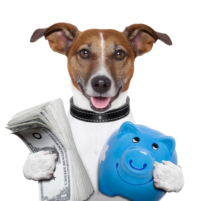 Hundehaltung Kosten