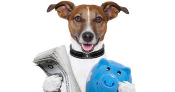 Kosten Hundehaltung