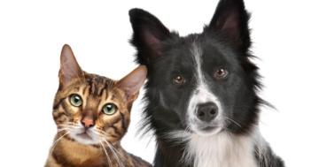 Katzenfutter für Hunde