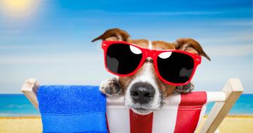 Hitze und Hund - Hund abkühlen im Sommer