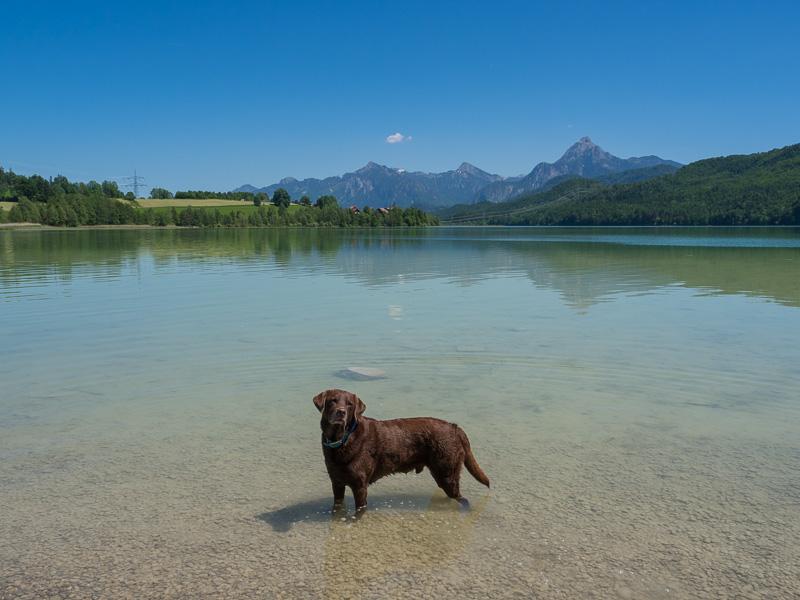 Hund abkühlen im See
