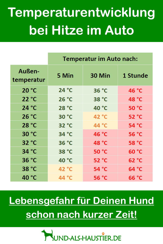 Hund und Hitze - Temperaturen im Auto