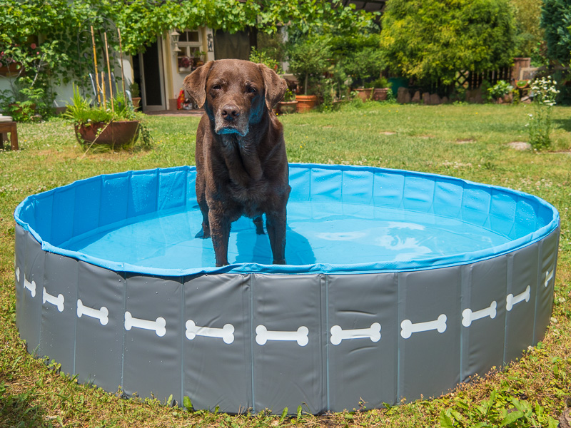 Hundepool als Abkühlung für Hunde