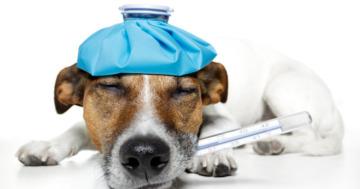 Was deckt eine Hundekrankenversicherung alles ab