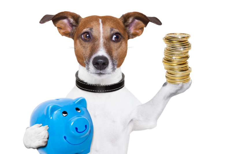 Hundekrankenversicherung was ist versichert