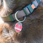 Hundemarke - Steuermarke Hund
