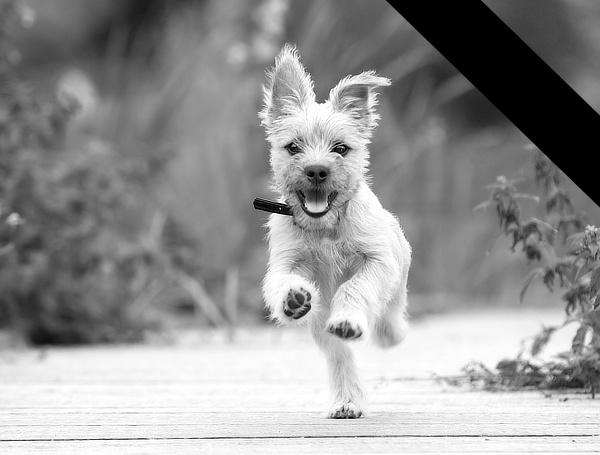 Hundebestattung - Hund gestorben was tun