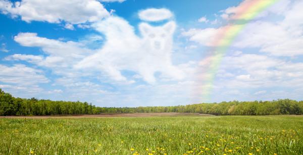 Trauersprüche Hund Abschied