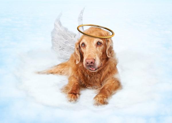 Trauersprüche Hund