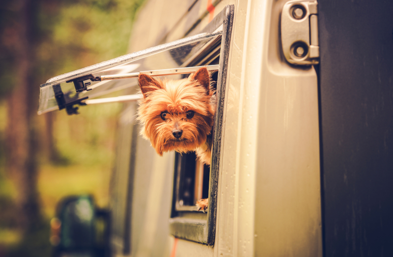 Hund im Wohnmobil zum Campen